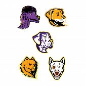 Mascot Icon Illustration Set Of Heads Of A Poodle, Pomeranian, Great Dane, Labrador Retriever, And B poster