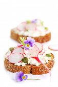 Wholesome sandwich with cheese, garden radish on white isolated background