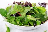stock photo of rocket salad  - mixed fresh salad leaves - JPG
