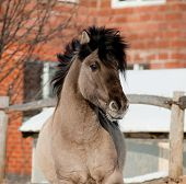 stock photo of dapple-grey  - grey horse close up close up in winter - JPG