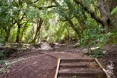 Rangitoto Island Pathways New Zealand