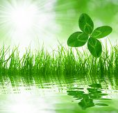 Grama verde fresca com trevo