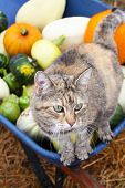 Squash Harvest I