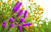 Decorative garden flowers.