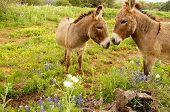 Cute Donkey Love