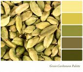 A background of green cardamom pods in a colour palette with complimentary colour swatches