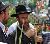 Bnei Brak - September 22: Two Orthodox Jews in black hats picks Lula before Sukkot September 22, 201