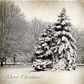 stock photo of snow forest  - Retro card with Merry Christmas trees and Christmas trees in snow winter landscape - JPG