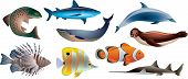 picture of clown fish  - fishes and marine life photo realistic vector set - JPG