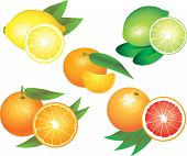 image of mandarin orange  - popular citrus fruits photo realistic vector set - JPG