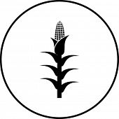 corn plant symbol