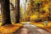golden autumn, path in forest