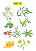 Herbs Set  Illustration