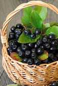 picture of aronia  - Black chokeberry  - JPG