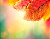 Autumn Background. Beauty Colorful Leaves and Sun Light. Fall. Yellow, Orange, Red and Green Colors.