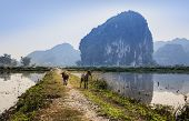 Country road with goat in Ninh Binh, Vietnam.