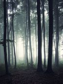 Vertical photo of dark mysterious forest with fog trough trees