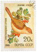 Stamp Printed By Russia, Shows Bird, Reed Parrotbill