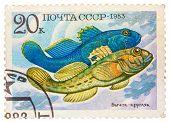Stamp Printed By Russia, Shows Fish, Neogobius Fluviailis