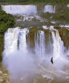 Waterfalls and birds. Black Andean condors fly over the foamy waterfalls of Iguazu. Brazil