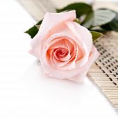 The Pink Rose Lies On A Napkin.