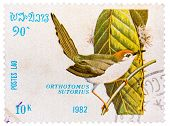 Stamp Printed In Laos Shows Common Tailorbird (orthotomus Sutorius)