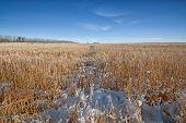 Snowy Prairie Landscape