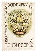 Stamp Printed In Russia, Shows Snow Leopard In Moscow Zoo, 120Th Annivarsery Series