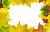 Autumn Leaf Frame. Autumn background.