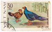 Stamp Printed In Vietnam Shows Lophura Edwardsi Or Edwards's Pheasant, Series Devoted To The Ornamen