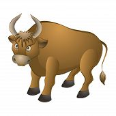 bull on a white background