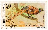 Stamp Printed In Vietnam Shows Phasianus Colchicus Or Common Pheasant, Series Devoted To The Ornamen
