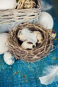 Speckled quail eggs