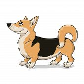 image of corgi  - Welsh corgi terrier with black back - JPG