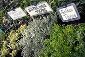 Fresh Garden Herbs At Market