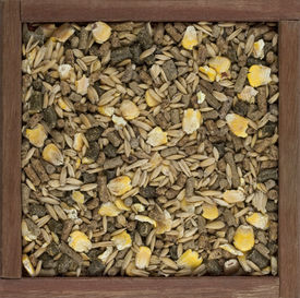 picture of feeding horse  - horse feed with corn barley oats grain and supplement granulates in a rustic wooden box - JPG