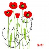 Red poppies and barbed wire. Symbol of the fallen. Place for text