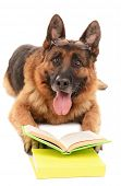 Funny cute dog with books isolated on white