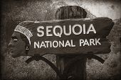 Sequoia National Park entrance in California