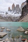 picture of pain-tree  - The three Torres in Parque Nacional Torres del Paine Chile - JPG