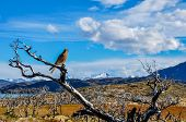 stock photo of pain-tree  - Pray bird in Parque Nacional Torres del Paine Chile - JPG