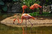 Pink Flamencos At The Zoo, Cali, Colombia