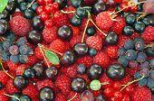 Assorted Berries (raspberries, Black And Red Currants, Saskatoon, Cherry, Gooseberry) As Background