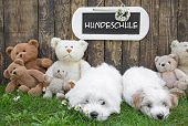 Two Little  Puppies With Teddy Bears And A Wooden Sign On The Background.