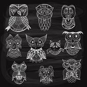 10 Chalk Drawn Owls On Blackboard