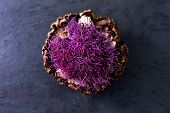 Purple Flowering Artichoke