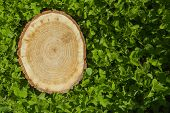 tree stump on the green grass, top view