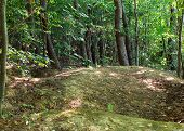 Earthen Hills In The Forest