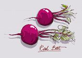 Vector Hand Drawing A Red Beet
