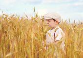Cute Boy Walking The Wheat Field